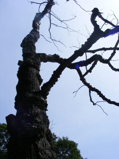 ett klick för skogen